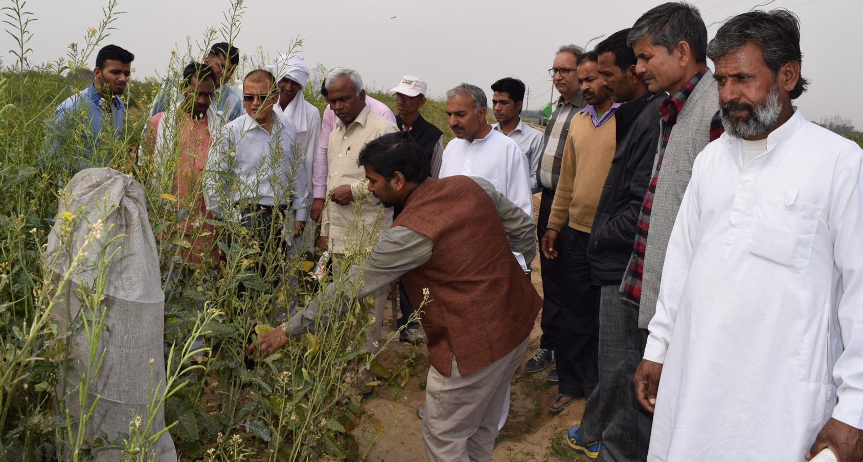 Farmers from Bulandshahar district interact with Brassica group